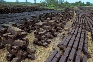 Peat bricks being dried, ready for a fuel source
